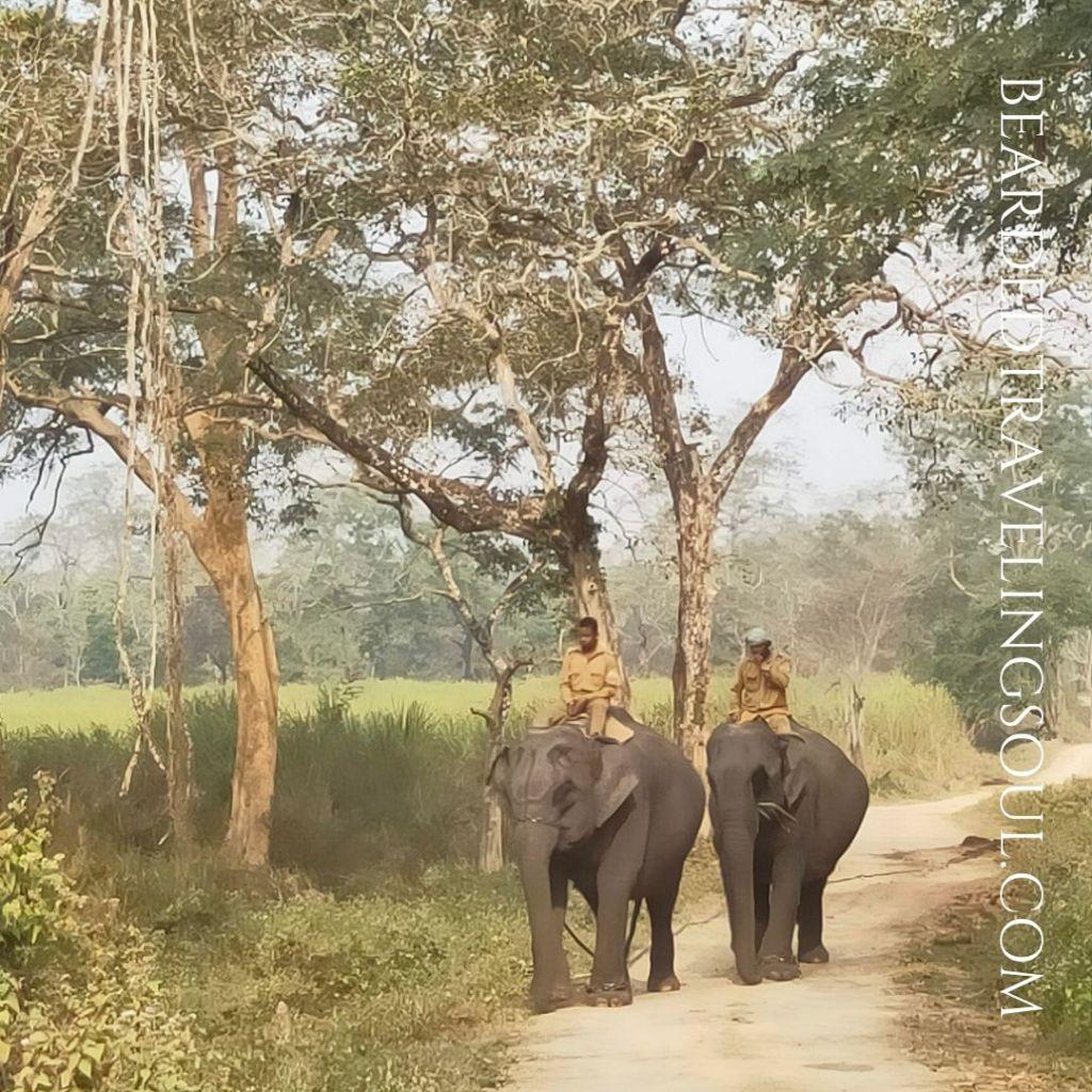 Elephants Returning home