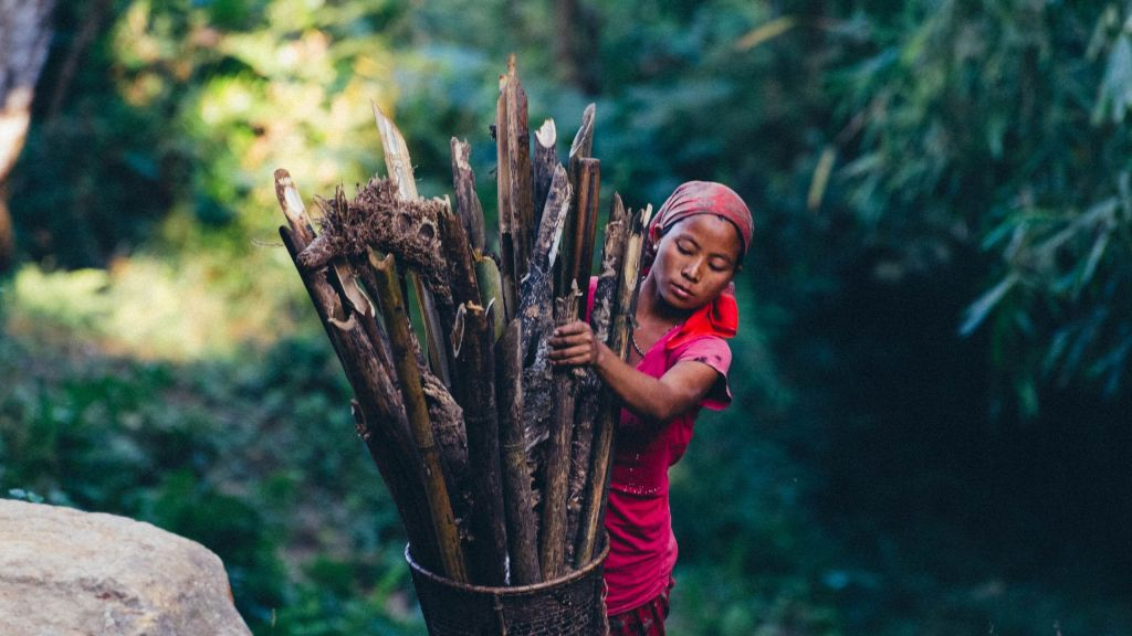 A Naga Lady gathering firewood in a village in Nagaland