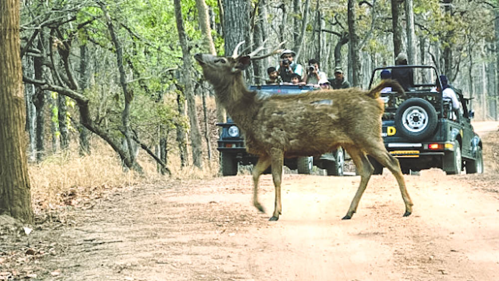 wildlife expedition in Central India
